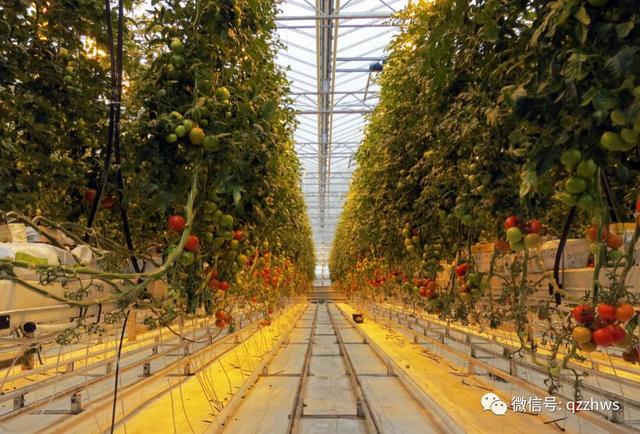 智慧农业是我国农业现代化的发展趋势