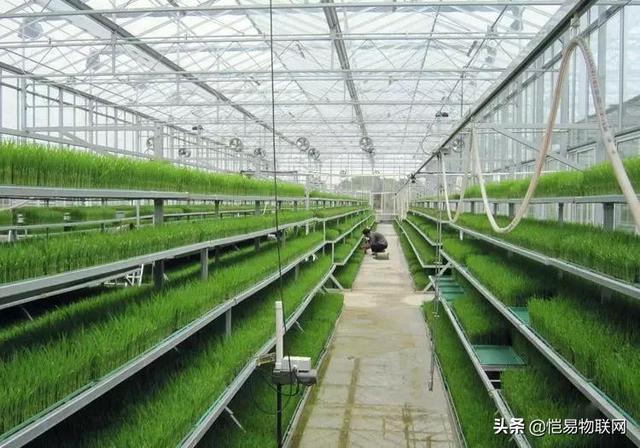 智慧农业大棚物联网,见证蔬菜大棚+物联卡的天作之合