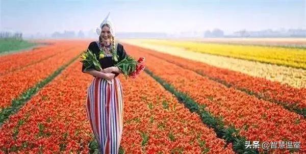 """外国""""智慧农牧业""""的做法与经验"""