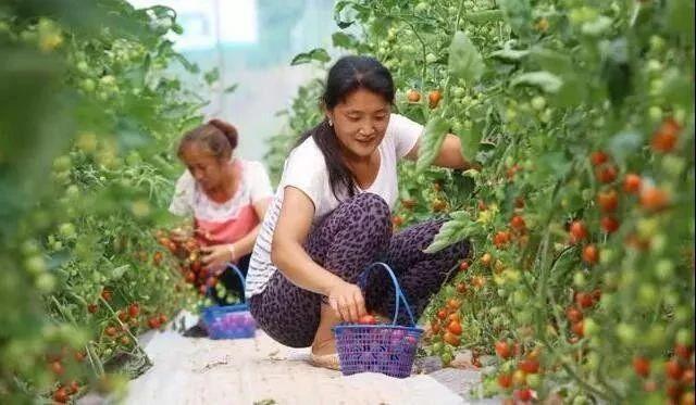 一文讀懂智慧農業:行業機會、發展模式、場景應用、未來路線
