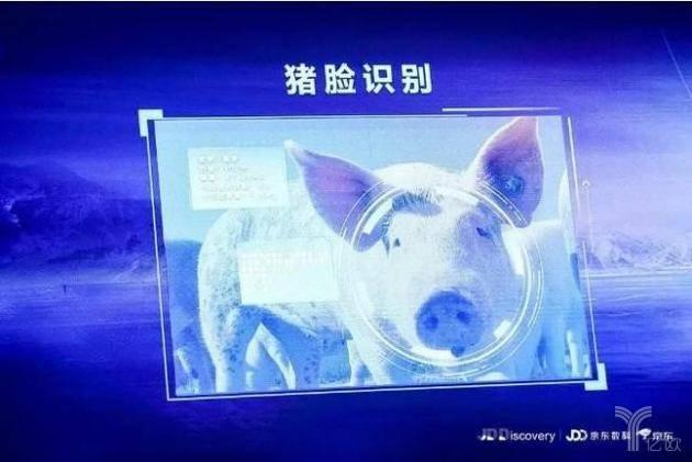 猪脸识别.jpg
