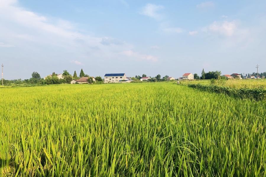 农业,水稻?,卫星遥感,大数据,一级黄色录像影片网,人工智能
