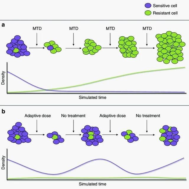 適應性療法中設計的進化動力學示意.jpg