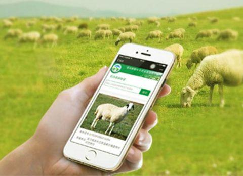 RFID畜牧業應用